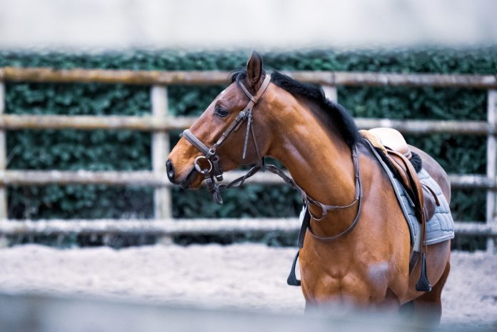 Equestrian sports and safety